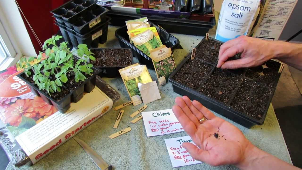 Great Herbs How To Seed Start Chives Thyme Indoors Over Seeding Method Mfg 2014 Youtube