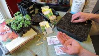 Great Herbs! How to Seed Start Chives & Thyme Indoors: Over Seeding Method! - MFG 2014