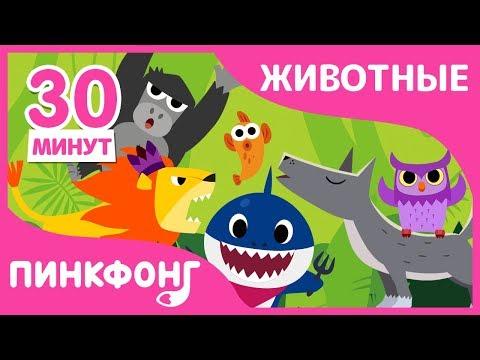 Акулёнок и другие песни | Песни про Животных | + Сборник | Пинкфонг Песни для Детей