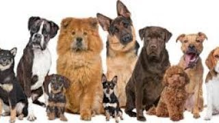 Roblox HAPPY DOGS DAY (durante 12 días)