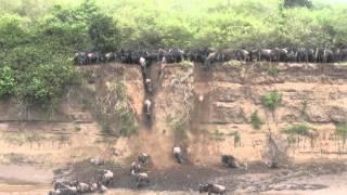 マサイマラで出会った動物たちをまとめた動画です!ダイナミックなヌー...
