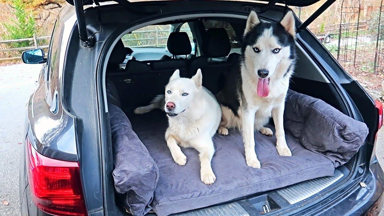 Huskies Love New Car Dog Bed!