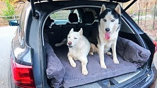 Huskies Love New Car Dog Bed!