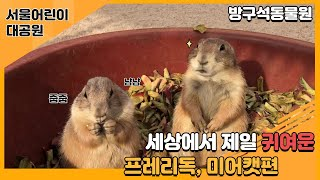 서울어린이대공원 방구석 동물원(프레리독, 미어캣편)썸네일