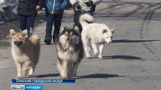 В Ольском городском округе планируют построить приют для бездомных собак