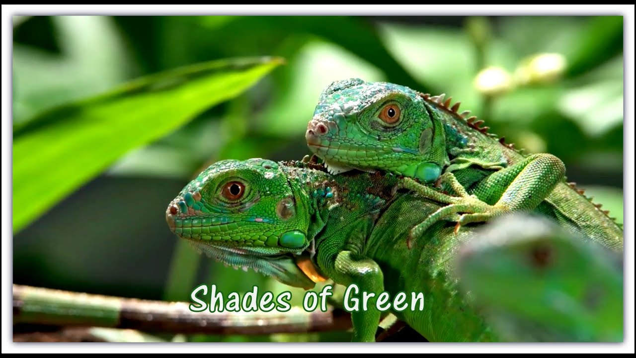 bright colors shades of green hd youtube