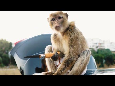 Skander LeGacy - Mumbai/مومباي - [Clip Officiel] Prod By Ramoon