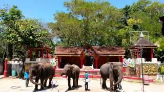 Шоу слонов в Таиланде, Пхукет