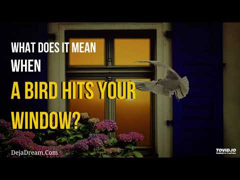 What Does It Mean When A Bird Hits Your Window?