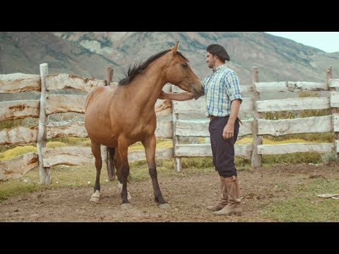 Wild Patagonian horse is masterfully tamed - Wild Patagonia - BBC Earth