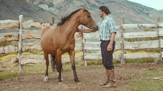 Wild Patagonian Horse Is Masterfully Tamed | Wild Patagonia | BBC Earth thumbnail