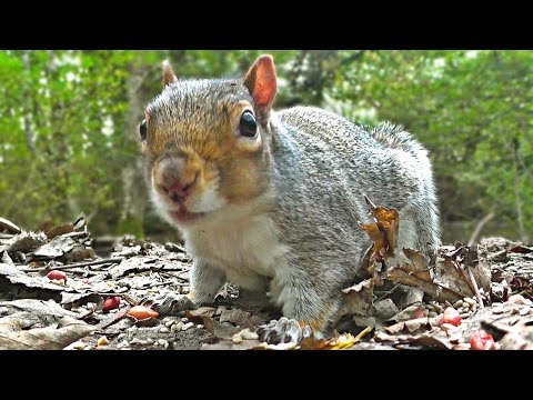 Entertainment Videos For Cats and Dogs To Watch – Squirrel and Bird Fun