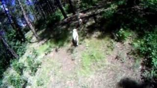 Wyatt West Ranch Montesa Honda Cota 4rt Trials Bike Labrador Retriever Durango Colorado Log Home