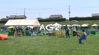 Bleau, Standard Poodle, Jkc Agility Games On 17 May 2015 In Yoshimi