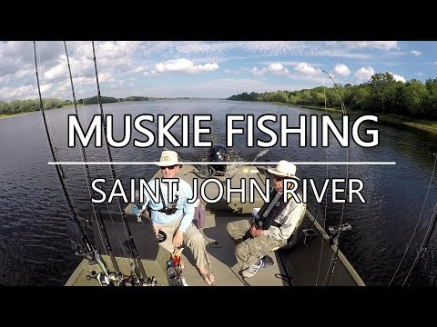 Muskie Fishing Saint John River Canada August 2018-Underwater Views!