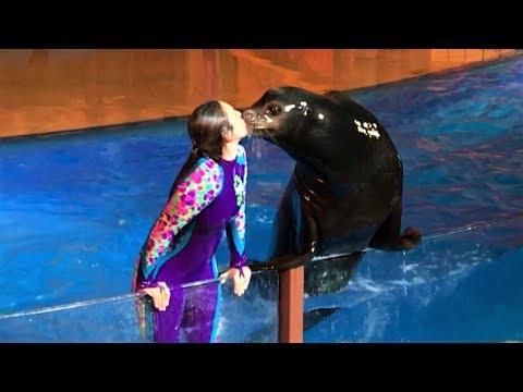 Sea Lion Tonite 2017 (Amazing PreShow + Full Show) SeaWorld San Diego, June 3 Night Special Show