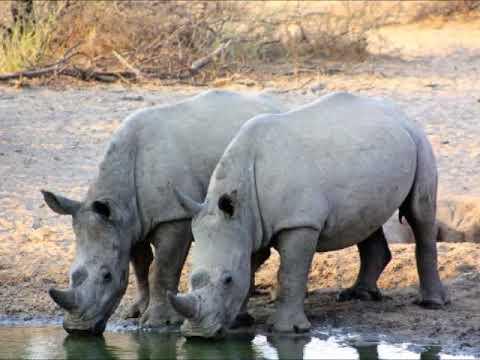 Travel to : Botswana !!!
