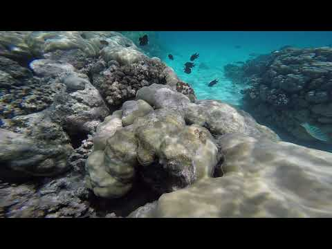 Solomon Islands Fatboys Snorkel