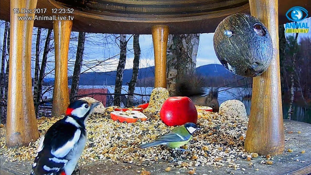 🐦 Ptaki i 🐿️ wiewiórka w karmniku z dźwiękiem 🔊 nad Soliną