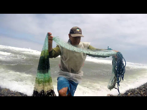 Lucky fisherman catches this treasure of fish (Sole) in his network