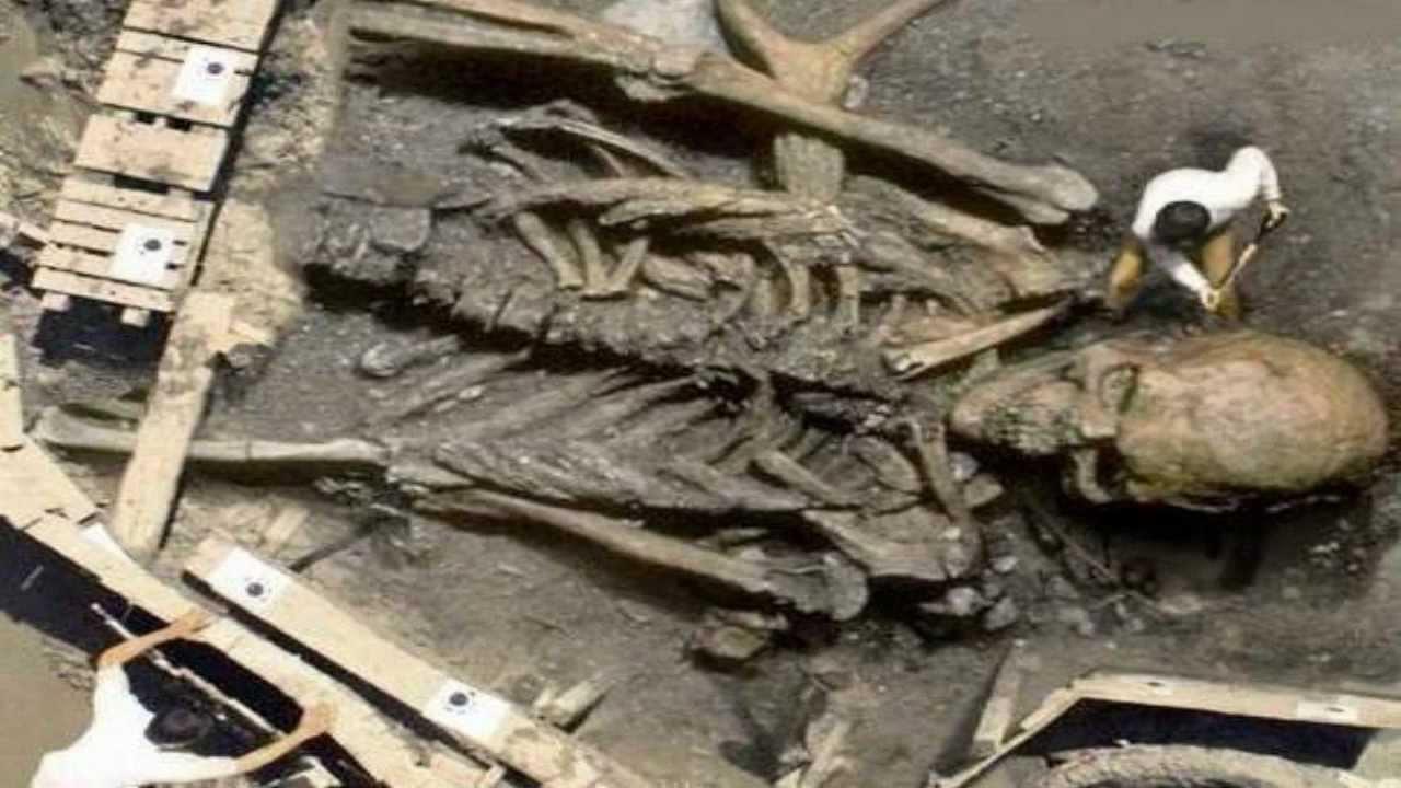 Giant Human Skeleton F...
