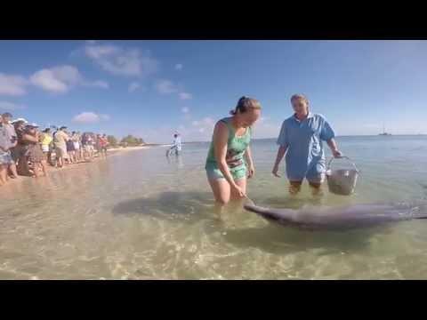 Feed Wild Dolphins @ Monkey Mia, Sharkbay - Western Australia