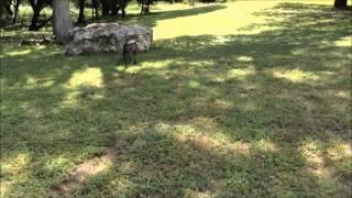 Precision K9 Work Dog Training Austin Tx