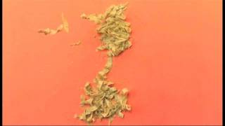 Fettuccine In Pesto Sauce
