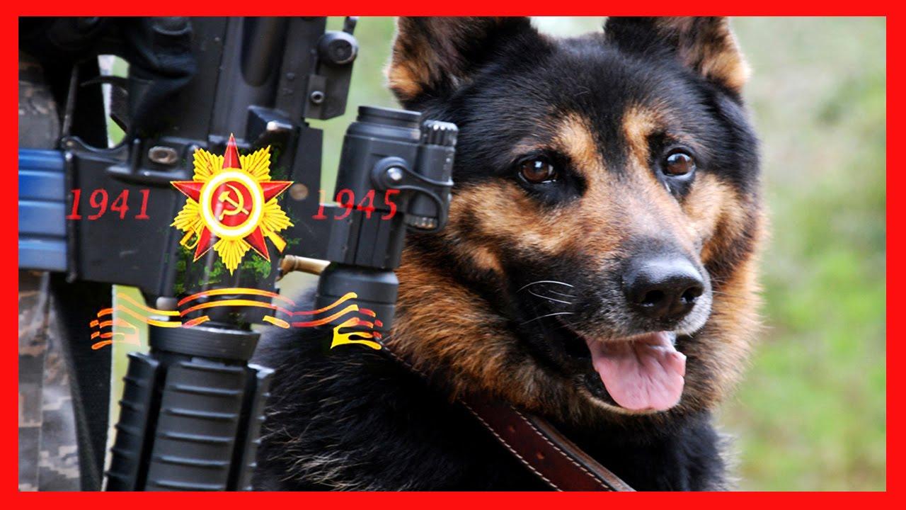 Открытка собаки на войне