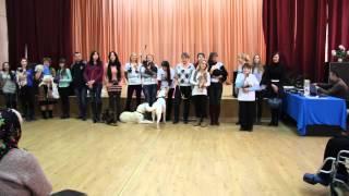 Волонтерское движение по защите бездомных животных в г.Гомеле