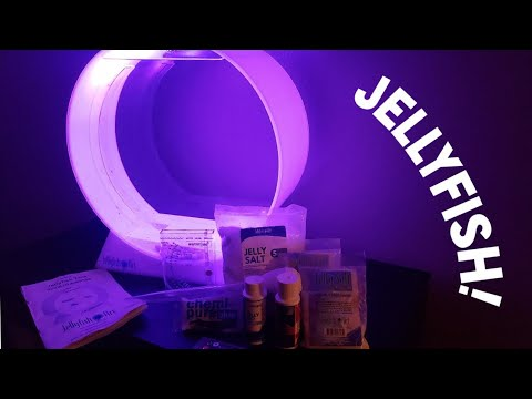 Setting Up My Jellyfish Tank