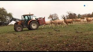 Sécheresse : un éleveur isérois vend une partie de son bétail