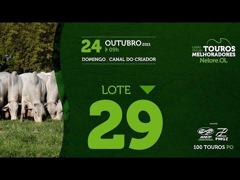 LOTE 29 - LEILÃO VIRTUAL DE TOUROS MELHORADORES  - NELORE OL - PO 202