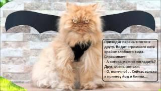 Анекдоты про котов/ ч 3/ Коты. Кошки. Котята/Домашние питомцы/ Котэ Саратовский /Юмор
