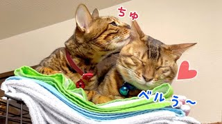 冷え切っていた猫夫婦が久々にイチャイチャしています!