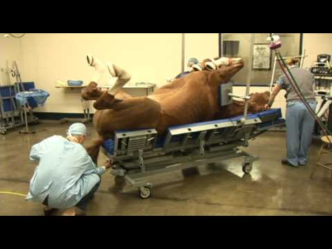 Surgery on a horse at Pioneer Equine Hospital