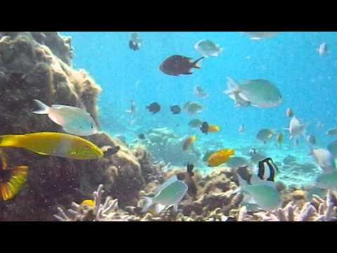 安慶名敷島の海は魚が大混雑?