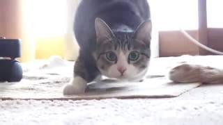 �������� ���� Кот смешно танцует ������