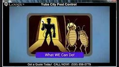 Yuba City Pest Control | (530) 656-5779 | Pest Control Yuba City CA