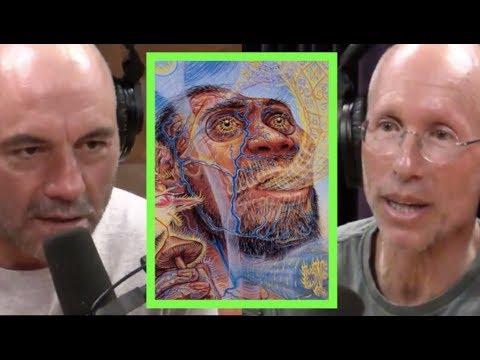 Joe Rogan - William Von Hippel on Stoned Ape Theory