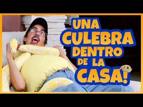Daniel El Travieso - Papi Casi Se Muere!