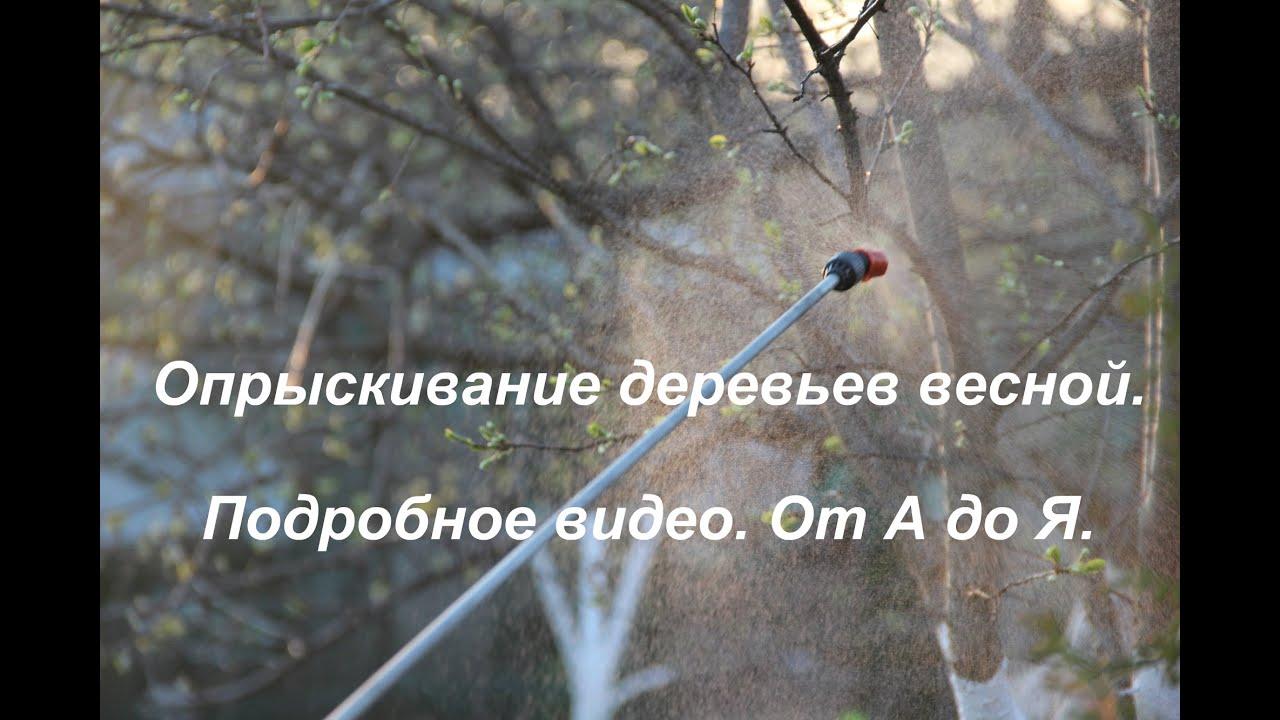 Опрыскивание деревьев весной.Подробное видео.От А до Я.