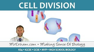 Cell Division - Mitosis and Meiosis - GCSE Biology (9-1)