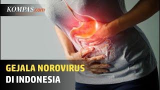 Dokter 24 - Sakit Perut, BisaJadi Tanda Penyakit Kronis.