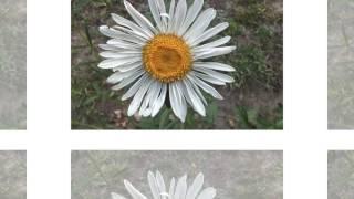 Цветы  лимана
