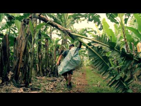 Australian Banana Grower Shannon Paton from Palmerstone, Queensland