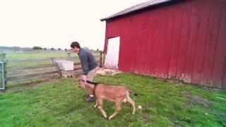 Keegan Smith-Nichols '17 at Moonshadow Farm in Yellow Springs, Ohio