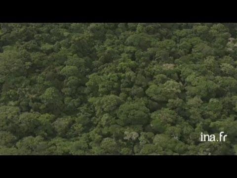 Gabon : forêt et fleuve tumultueux