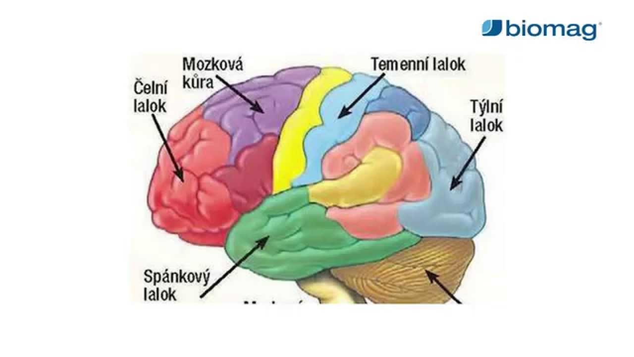 magas vérnyomás agyi ödéma)