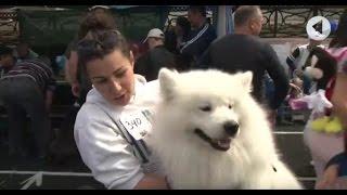 Выставка собак «Кубок мира-2017» и чемпионат Англии в Тирасполе / Утренний эфир